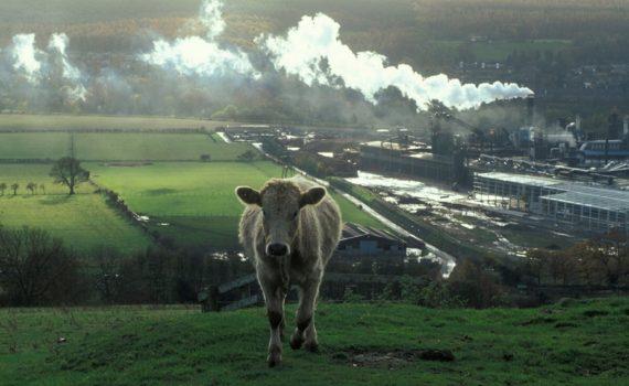 cow methane emitter