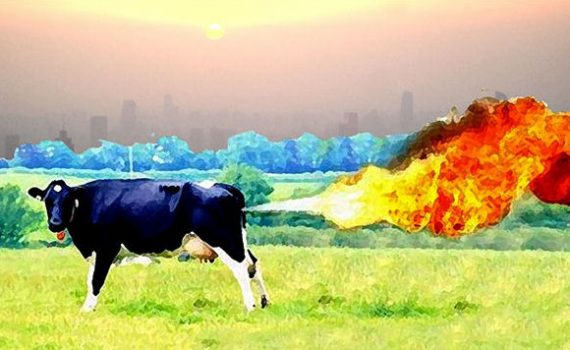 Cow emitting methane - New Zealand's record not something to be proud of