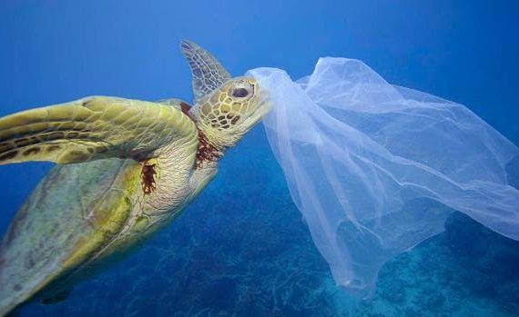 turtle and plastic waste